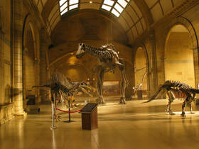 Scale model of Natural History Museum and dinosaur bones.
